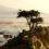 lone-cypress